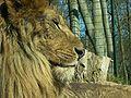 Eberswalde zoo 012.jpg