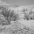 Ein Gidi Rotslandschap met enkele palmbomen, Bestanddeelnr 255-2751.jpg