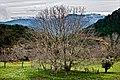 El que a buen árbol se arrima... (3171581863).jpg