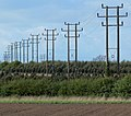 Electricity poles near Sutton Cheney - geograph.org.uk - 1331772.jpg