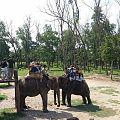 Elephant Safary in Chitwan NP.jpg