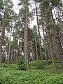 Elibank Forest - geograph.org.uk - 534979.jpg