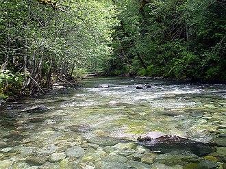 Bull of the Woods Wilderness - Elk Lake Creek
