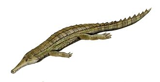 Kem Kem Beds - Elosuchus cherifiensis