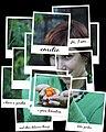 Em polaroids garden.jpg