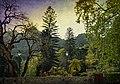 Enchanted Woodland (42735763384).jpg