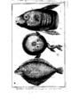 Encyclopedie volume 5-107.png