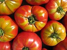 tomato wikipedia