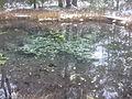Endla Nature Reserve (Gardmanahay) 4.JPG