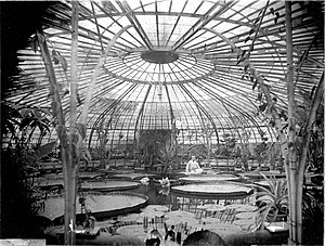 Hortus Botanicus Leiden - Greenhouse of the Hortus Botanicus with Victoria Regia. End of the 19th century.