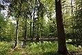 Erlenbruch Langwiesenholz 08.jpg