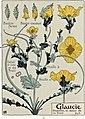 Etude de la plante - p.61 fig.71 - Glaucienne jaune.jpg