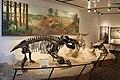 Exhibit of Triassic Period Treasure.jpg