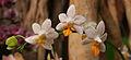 Exposition mille et une orchidées 1.jpg