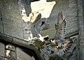 Falco peregrinus St John's Church Bath 1.jpg