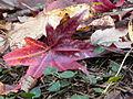 Fall at FLSP (5249371652).jpg