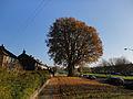 Fallen leaves (6451539603).jpg