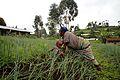 Farmer, North Kivu (12188080244).jpg