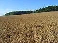 Farmland, Boxford - geograph.org.uk - 925048.jpg