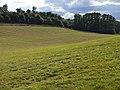 Farmland, Goring - geograph.org.uk - 1595602.jpg