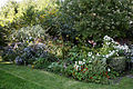 Feeringbury Manor flower herbaceous shrub border, Feering Essex England 1.jpg