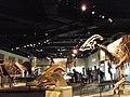 Field Museum (7398055346).jpg