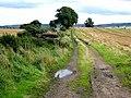 Field north of Chollerton - geograph.org.uk - 959942.jpg