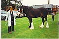 Fine Fetlocks at the Clydesdale Show, Duthie Park, Aberdeen. - geograph.org.uk - 116627.jpg