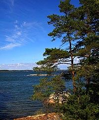 Sea Wikipedia