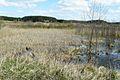Fish ponds, Miaczynek.JPG