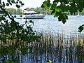 Flakensee - Schilfguertel (Reed-fringed Flaken Lake) - geo.hlipp.de - 36741.jpg