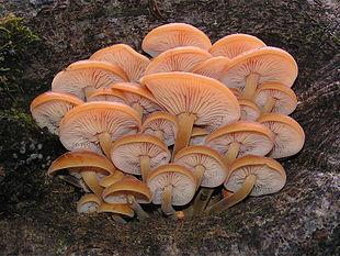 Mushroom Spawn Supplier In Hadapsar, Pune