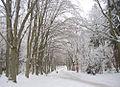 Flickr - Per Ola Wiberg ~ mostly away - a path thru the park.jpg