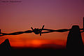 Flickr - law keven - Fenced in Sunset.....jpg