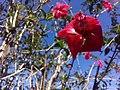 Flor de Artur 5.jpg
