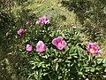 Flores en el barranco de la osa (44922664962).jpg