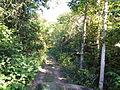 Floresta amazonica.JPG