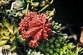 Flower 6 (149946659).jpeg