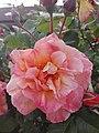 Flower Dortmund 12.jpg