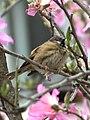 Flower Lover (13186286915).jpg
