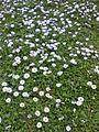 Flowers......++.jpg