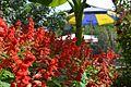 Flowers Hot summer Aghdam, Azerbaijan Rafael Guliyev's garden.jpg