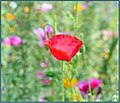 Flowers Rule (210925893).jpeg