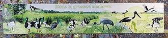 Fogg Dam Conservation Reserve - Birds of Grassed Shallows