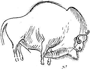 Font-de-Gaume - Image: Font de gaume bison