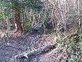 Footbridge in Walk Wood - geograph.org.uk - 1620958.jpg