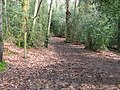 Footpath branching to the right in Hammonds Wood - geograph.org.uk - 1258396.jpg