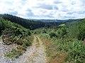Footpath in Cwm-y-Rhaiadr forest - geograph.org.uk - 1496989.jpg