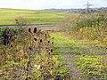 Footpath south of Sellar Acres - geograph.org.uk - 1556517.jpg