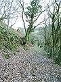 Footpath towards Wenallt - geograph.org.uk - 1191391.jpg